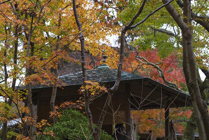 鎌倉・一条恵観山荘の紅葉①_b0145398_22334217.jpg