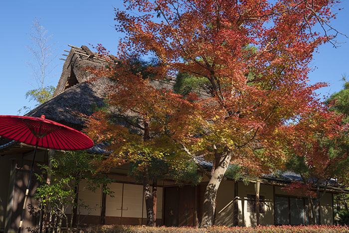 鎌倉・一条恵観山荘の紅葉②_b0145398_22414697.jpg