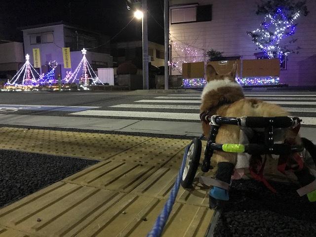 12月の夜は賑やか♪_f0242002_09404831.jpg