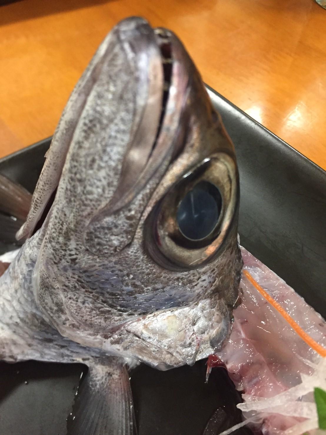 おはよう堂  黒ムツ・ネギトロ丼_e0115904_15450075.jpg