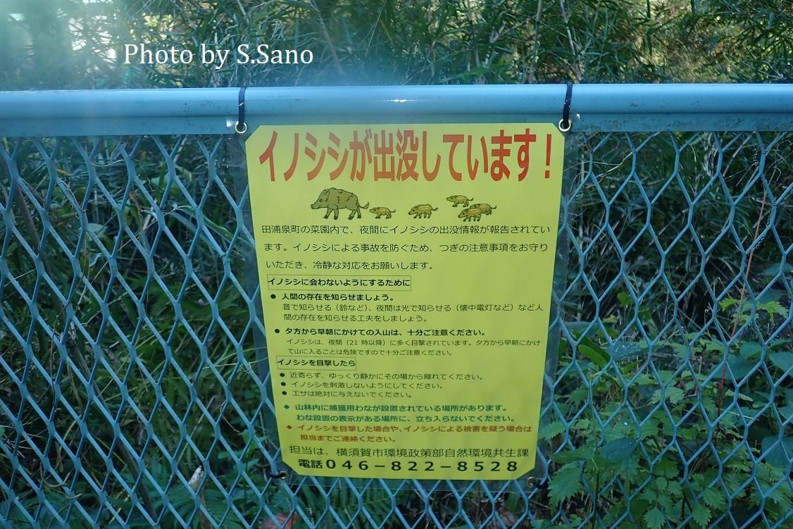 三浦半島の東京湾流入河川_b0348205_23253050.jpg