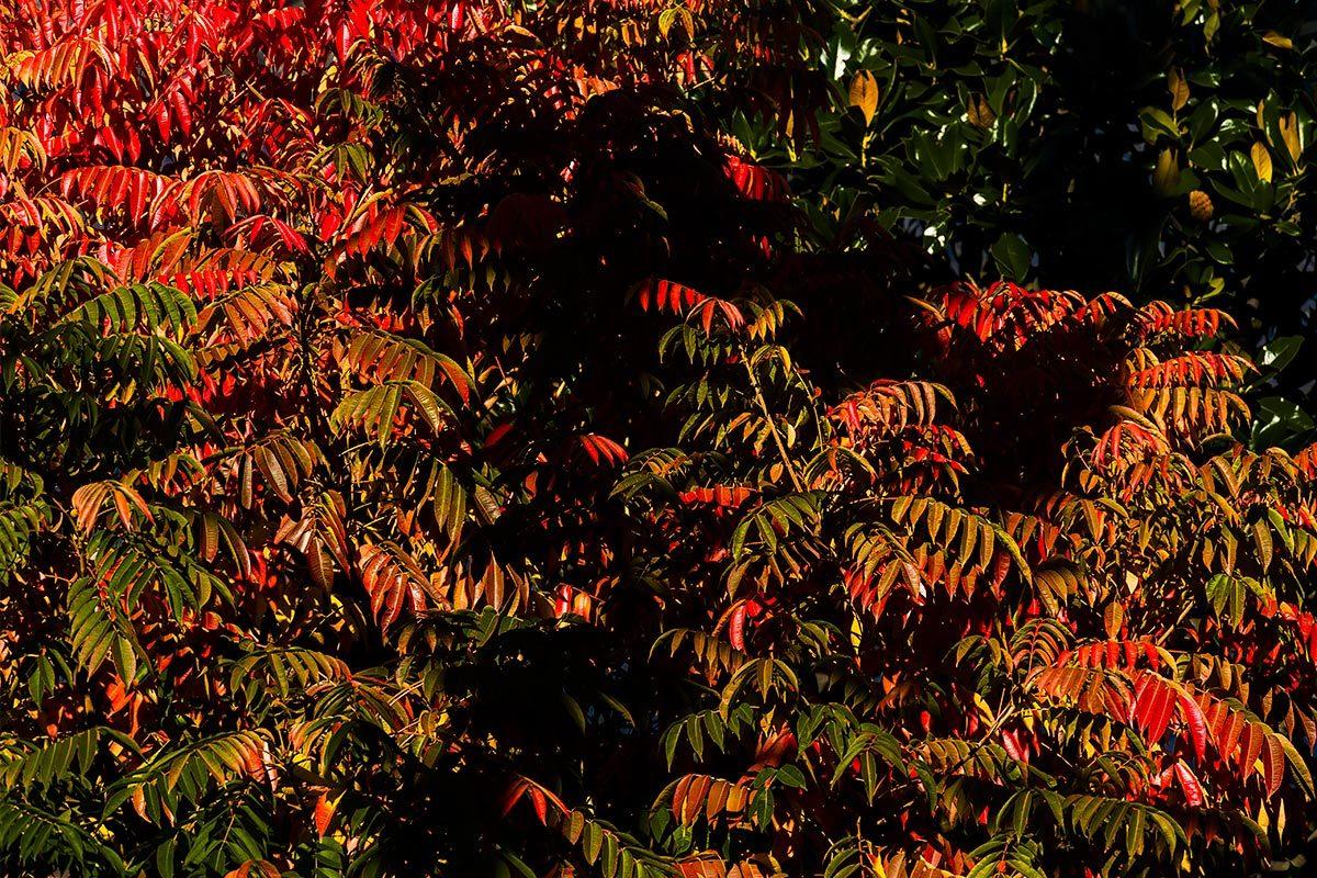 秋、真っ盛り。今日はお休み。  11月30日(土) 6757_b0069507_03111742.jpg