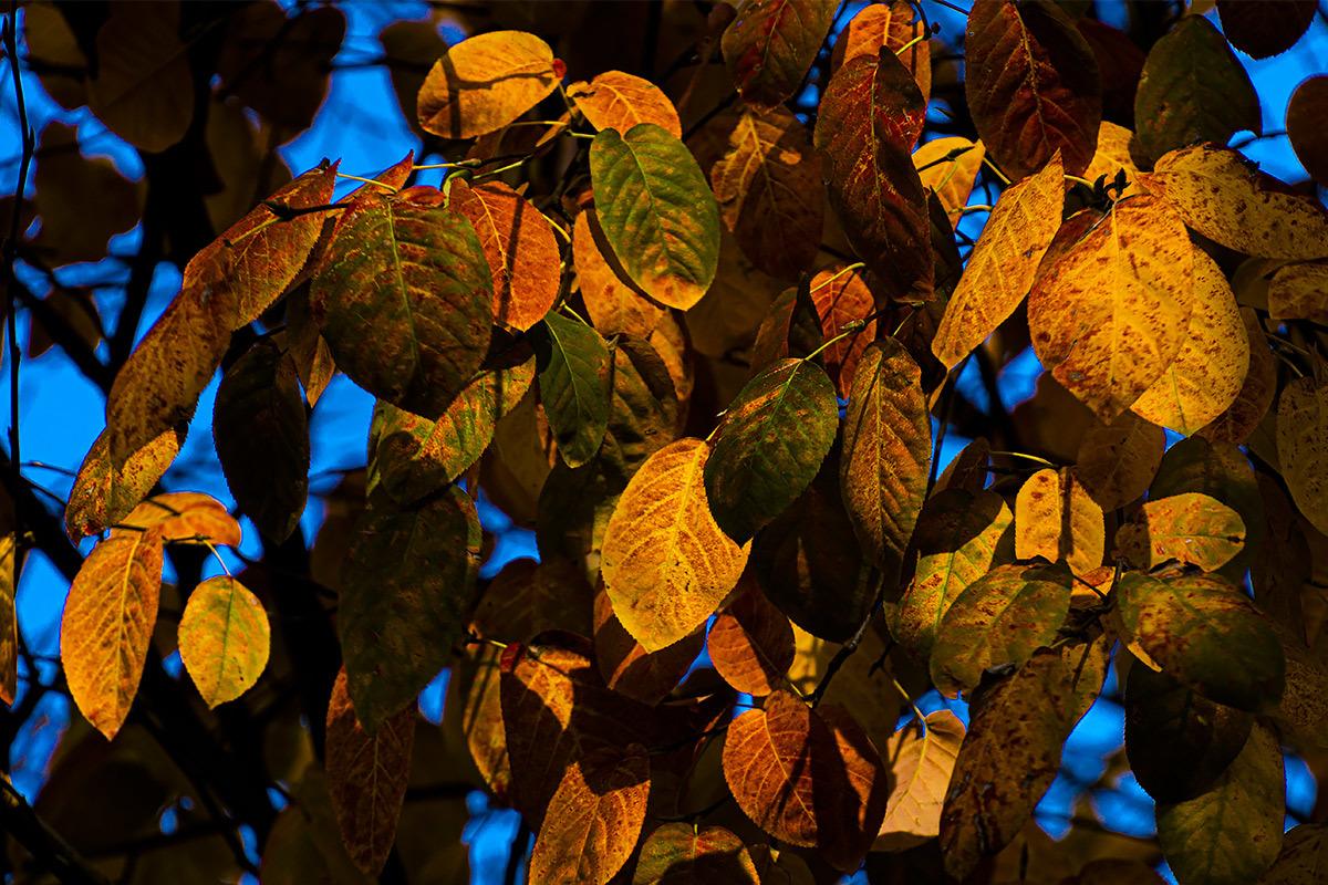 秋、真っ盛り。今日はお休み。  11月30日(土) 6757_b0069507_03111743.jpg