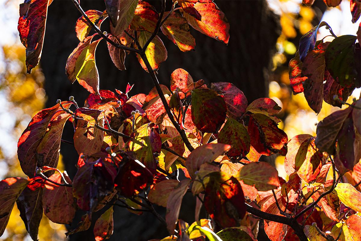 秋、真っ盛り。今日はお休み。  11月30日(土) 6757_b0069507_03111788.jpg
