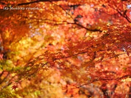 暖かな光の日_c0098807_00511745.jpg