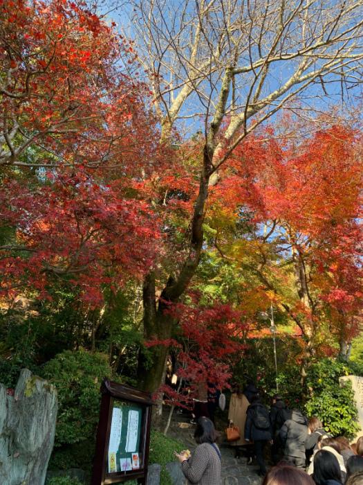 秋から冬になる時だけの京都へ_e0181908_14412756.jpg