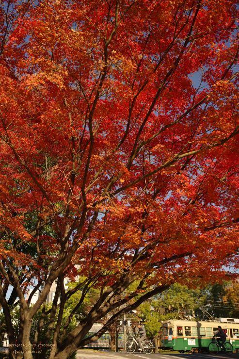イロハモミジの樹の下で_d0309612_00204151.jpg