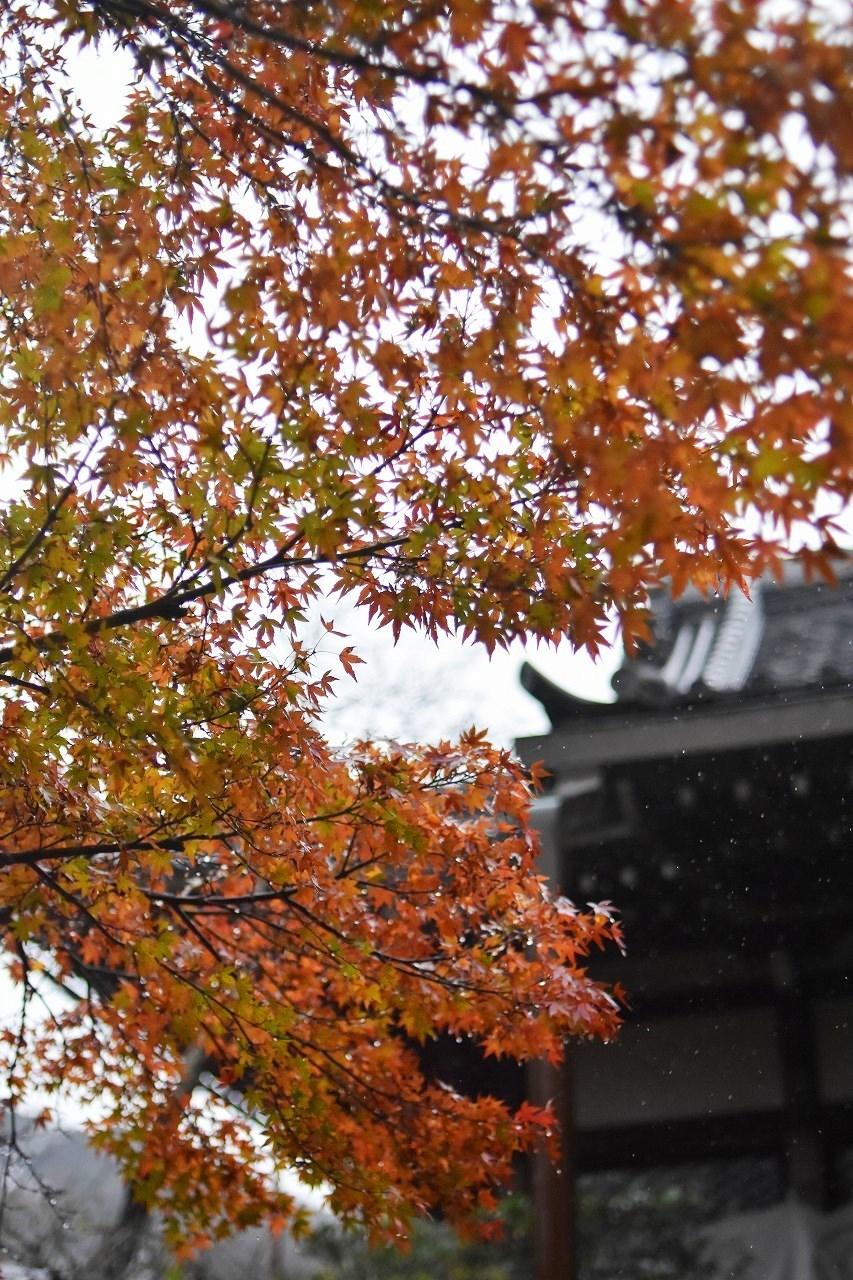 安国論寺 IN THE RAIN_d0065116_18264247.jpg