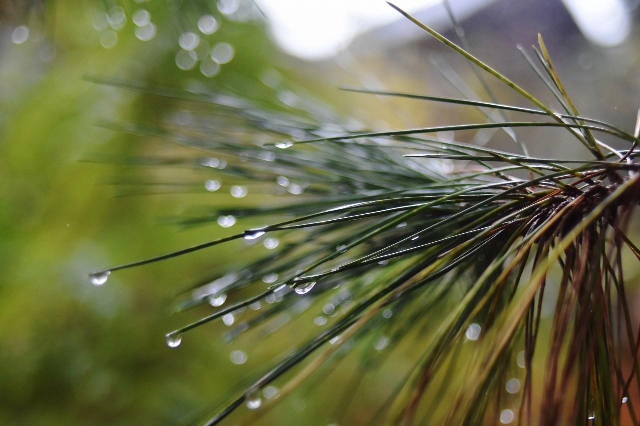 安国論寺 IN THE RAIN_d0065116_18363055.jpg