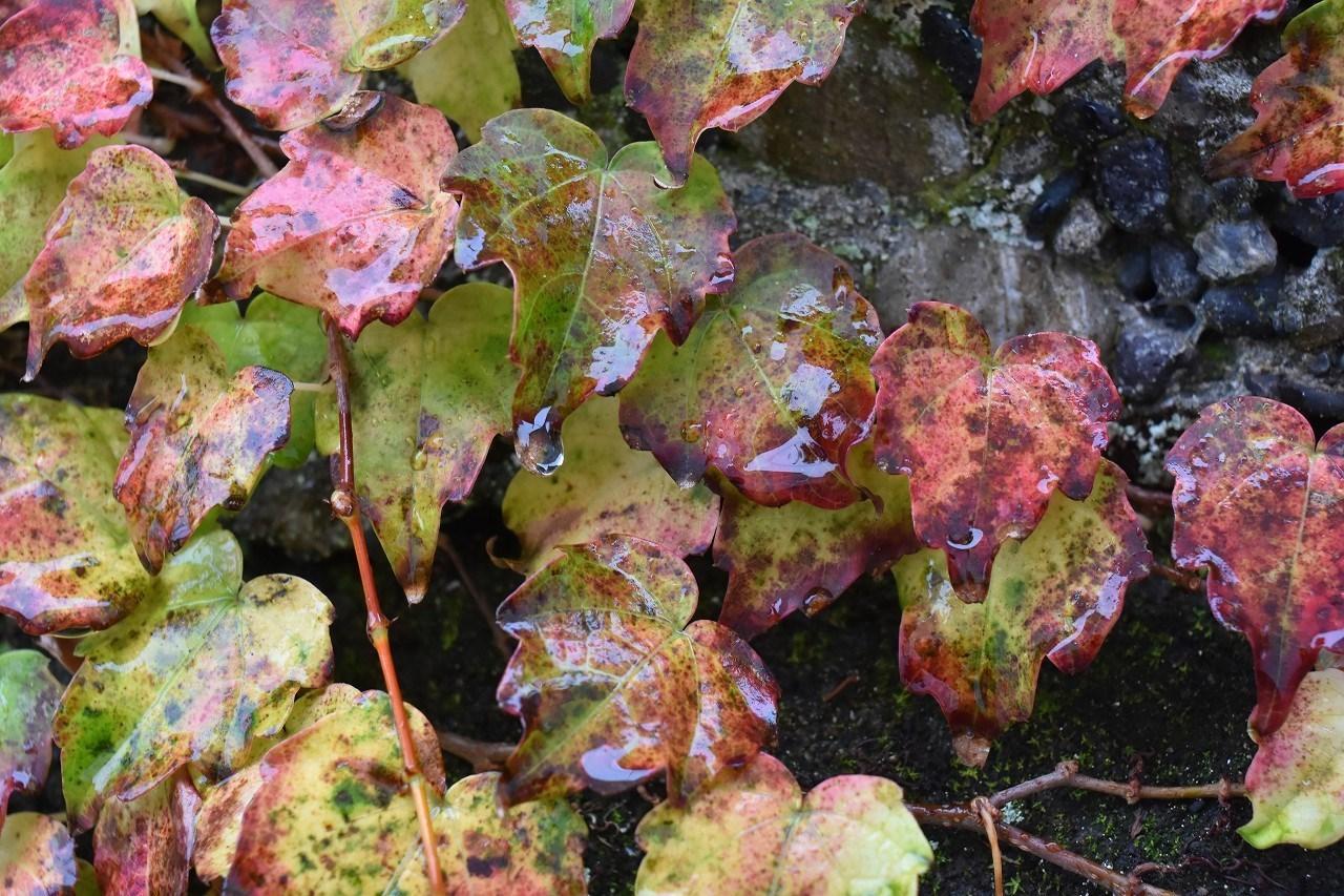 しっとり 雨の日の紅_d0065116_19462232.jpg
