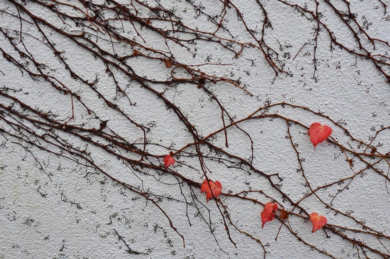 しっとり 雨の日の紅_d0065116_19483495.jpg