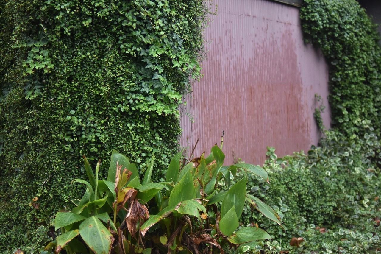 しっとり 雨の日の紅_d0065116_19523228.jpg