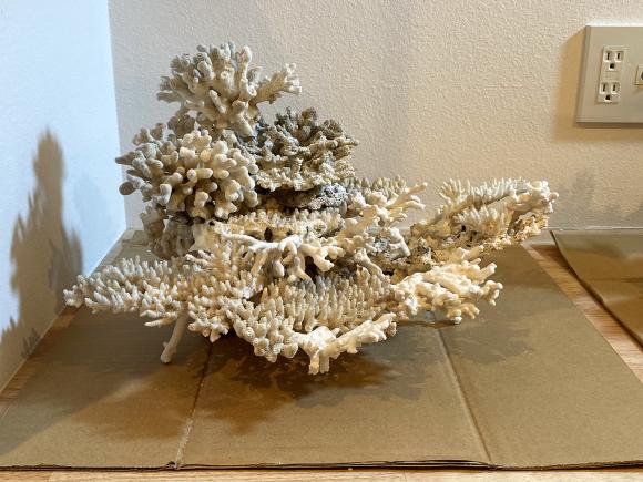 デスロック(白化サンゴ・飾りサンゴ)で立ち上げ:レイアウト習作_e0200816_22280654.jpg
