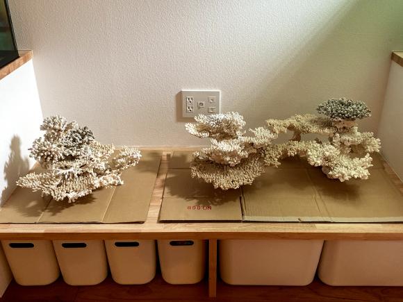 デスロック(白化サンゴ・飾りサンゴ)で立ち上げ:レイアウト習作_e0200816_22281690.jpg