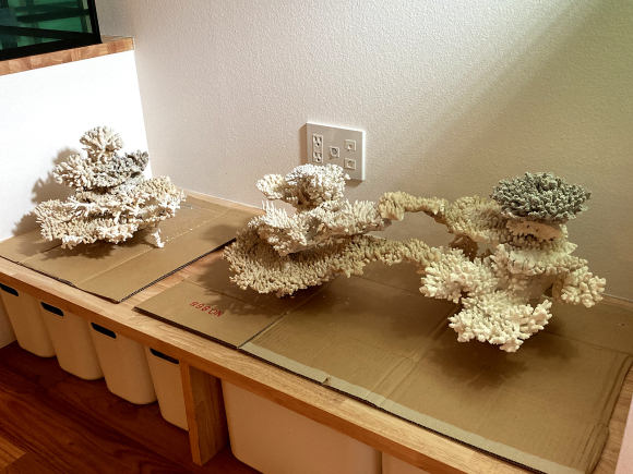 デスロック(白化サンゴ・飾りサンゴ)で立ち上げ:レイアウト習作_e0200816_22281750.jpg