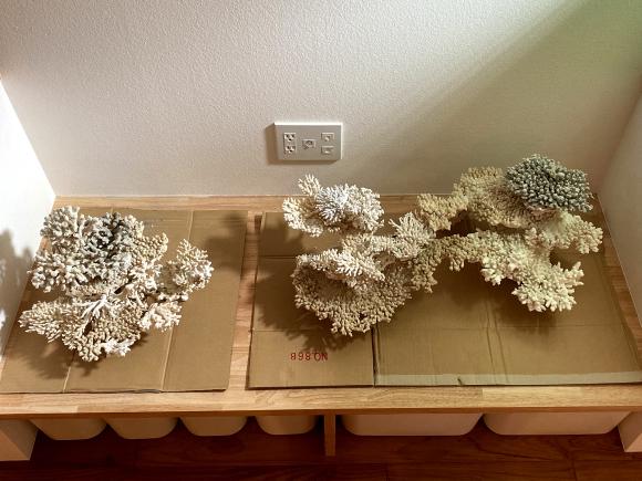 デスロック(白化サンゴ・飾りサンゴ)で立ち上げ:レイアウト習作_e0200816_22281798.jpg