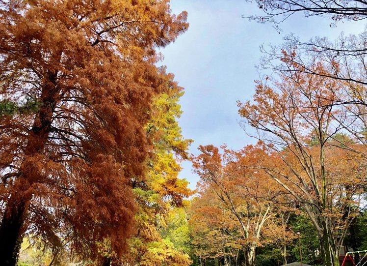 紅葉の石神井公園で撮影していただいたときのおはなし~奇跡のような光に恵まれて…。^^~_b0298740_23265980.jpg