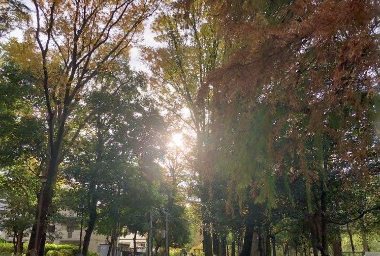 紅葉の石神井公園で撮影していただいたときのおはなし~奇跡のような光に恵まれて…。^^~_b0298740_23270052.jpg