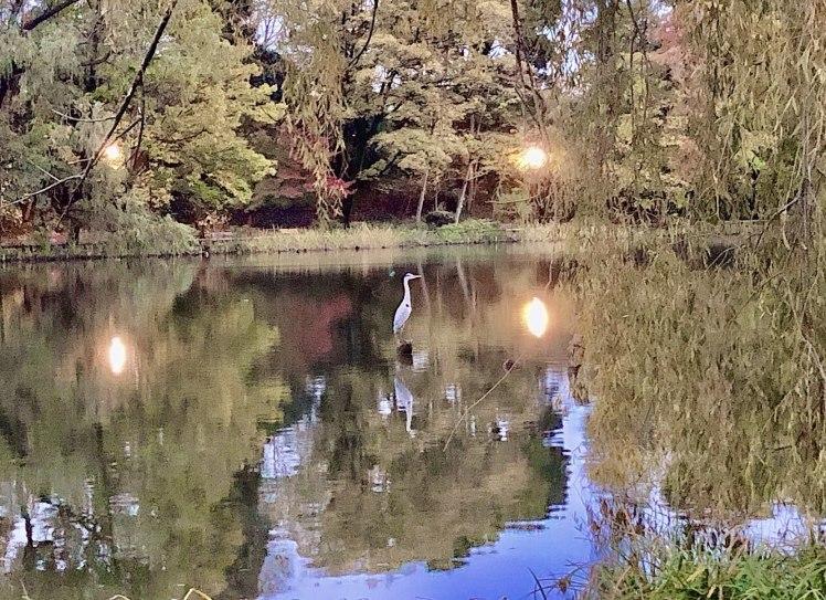 紅葉の石神井公園で撮影していただいたときのおはなし~奇跡のような光に恵まれて…。^^~_b0298740_23270341.jpg