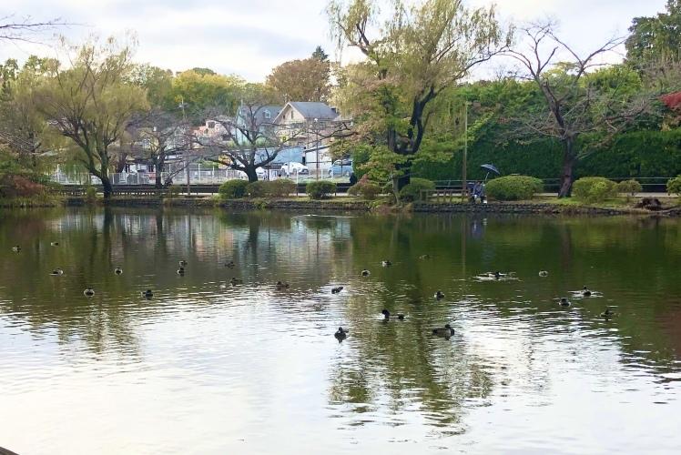 紅葉の石神井公園で撮影していただいたときのおはなし~奇跡のような光に恵まれて…。^^~_b0298740_23551869.jpg