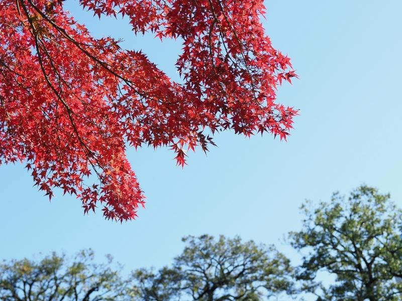 秋たけなわの小石川後楽園 ☆_d0146247_16543465.jpg