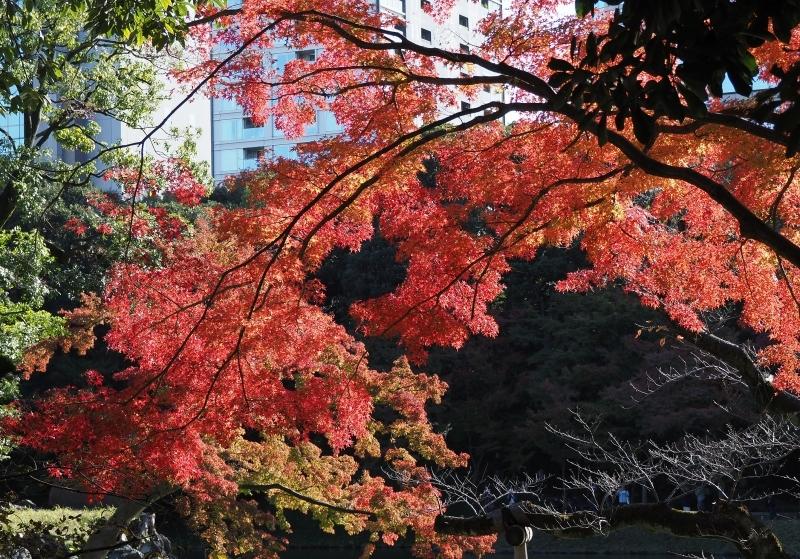 秋たけなわの小石川後楽園 ☆_d0146247_16545813.jpg