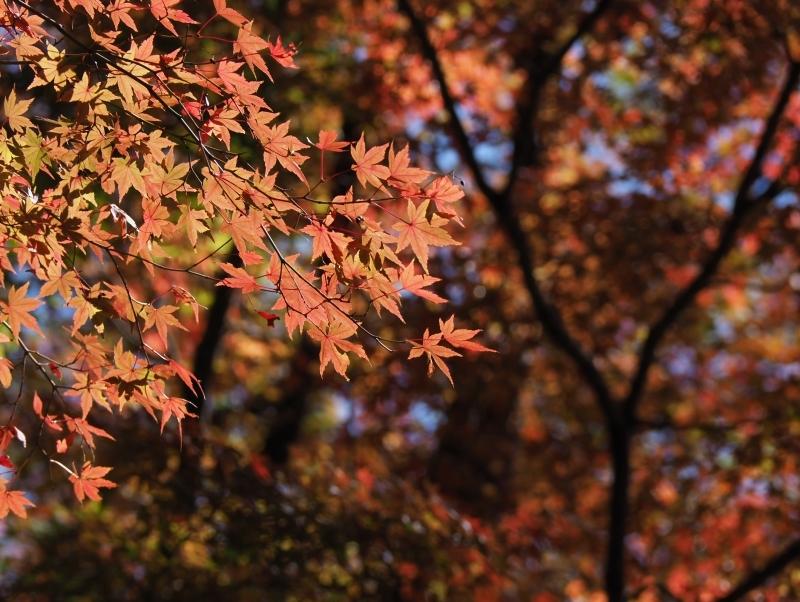 秋たけなわの小石川後楽園 ☆_d0146247_16552050.jpg