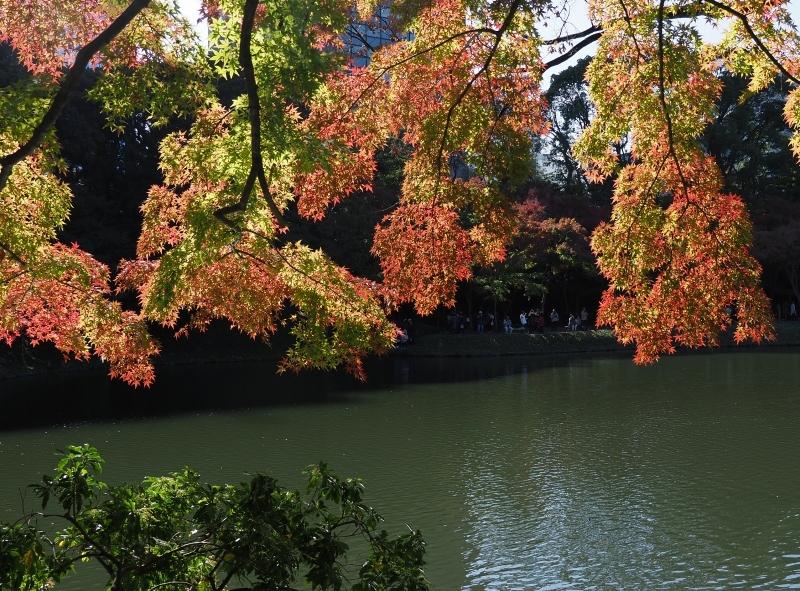 秋たけなわの小石川後楽園 ☆_d0146247_16555153.jpg