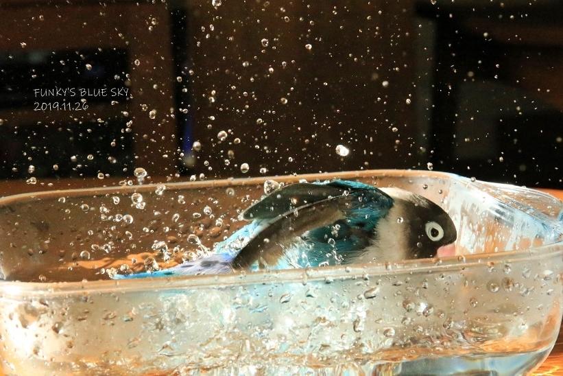水浴びB.Bの記録 (11月26日)_c0145250_09080039.jpg