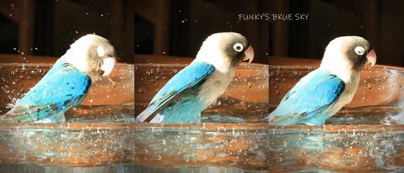 水浴びB.Bの記録 (11月26日)_c0145250_09081751.jpg