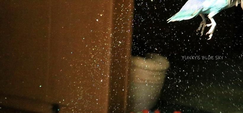 水浴びB.Bの記録 (11月26日)_c0145250_09082345.jpg