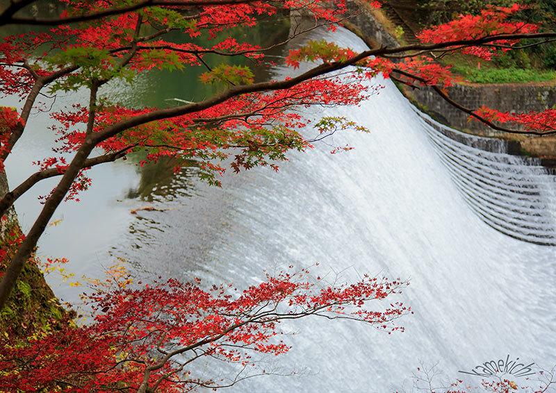 過年撮影の紅葉!(いずれも熊本地震前の撮影です。) _a0057752_10311568.jpg