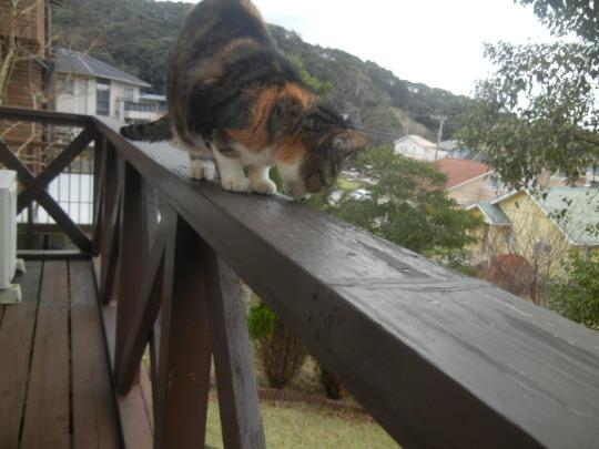 '19,12,1(日)トルコの猫ちゃんとワンちゃん!_f0060461_10212376.jpg