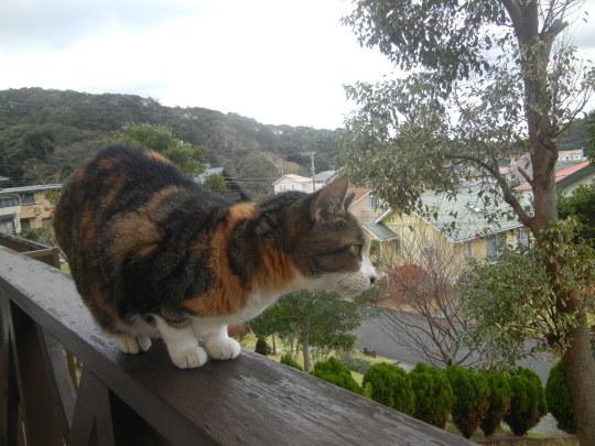 '19,12,1(日)トルコの猫ちゃんとワンちゃん!_f0060461_10241877.jpg