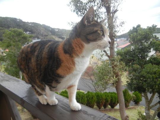 '19,12,1(日)トルコの猫ちゃんとワンちゃん!_f0060461_10254970.jpg