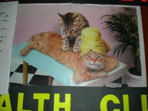 '19,12,1(日)トルコの猫ちゃんとワンちゃん!_f0060461_10535421.jpg