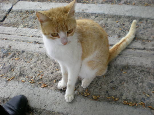 '19,12,1(日)トルコの猫ちゃんとワンちゃん!_f0060461_11095051.jpg