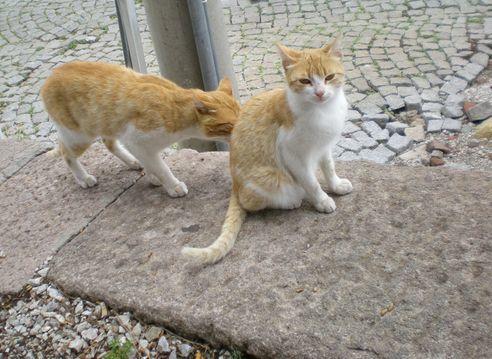 '19,12,1(日)トルコの猫ちゃんとワンちゃん!_f0060461_11134118.jpg