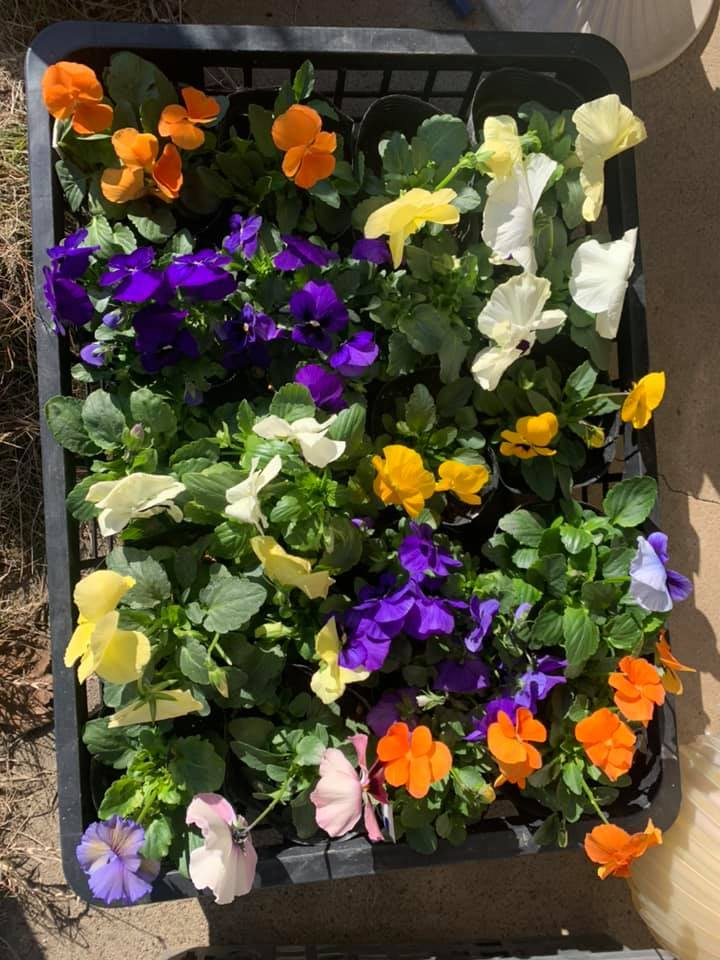 お花が綺麗よ~_e0040673_14203505.jpg