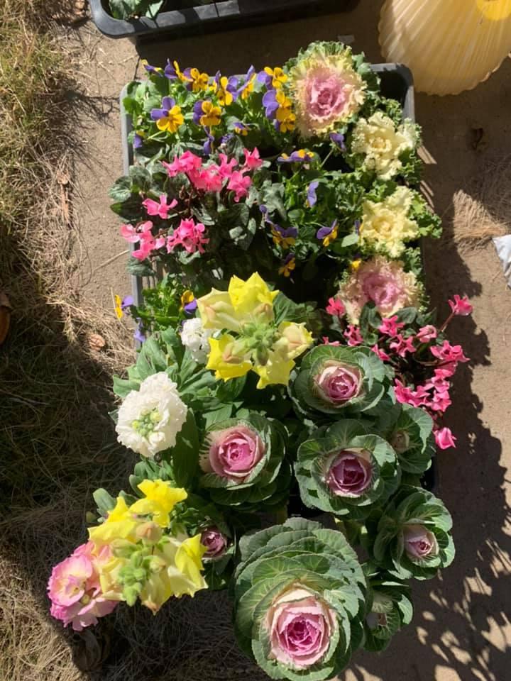 お花が綺麗よ~_e0040673_14212717.jpg