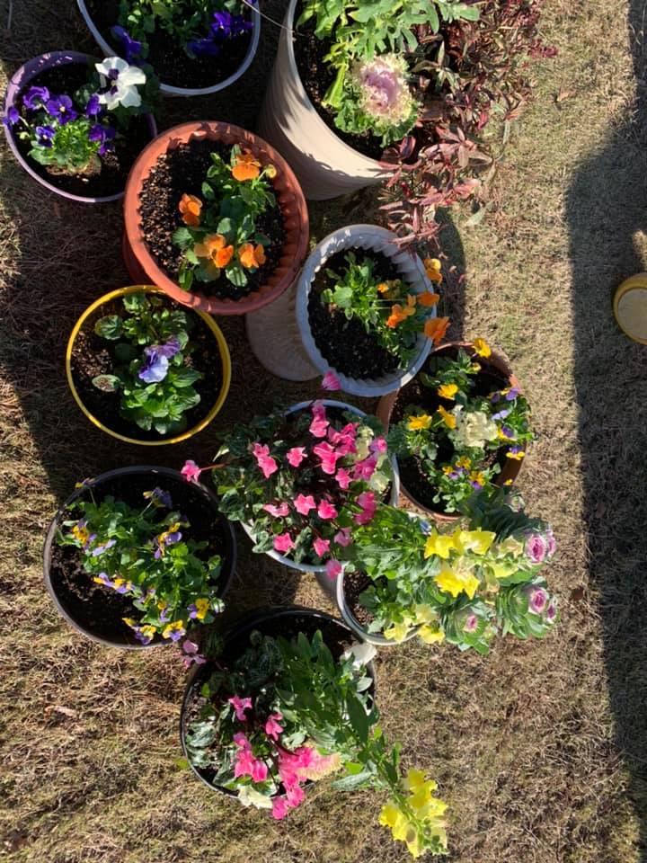 お花が綺麗よ~_e0040673_14221308.jpg