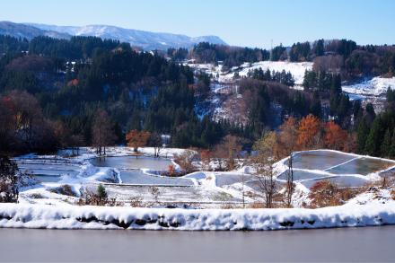 初雪と紅葉_a0025576_16275078.jpg