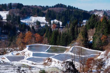 初雪と紅葉_a0025576_16275523.jpg