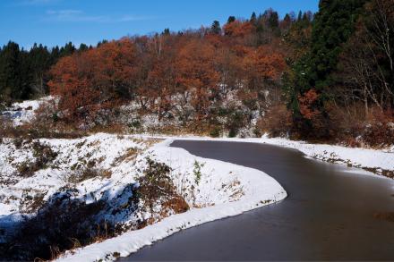 初雪と紅葉_a0025576_16310643.jpg