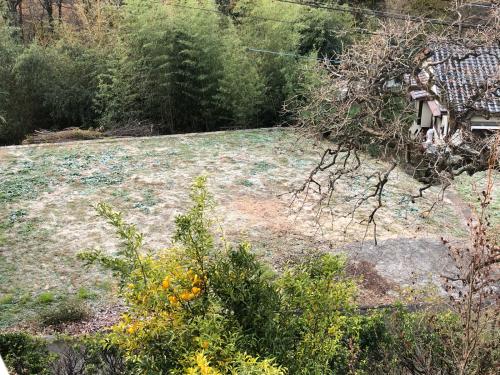 大掃除、まず、布団カバーから、外は今年一番、霜が降りました。_d0338282_15595308.jpg