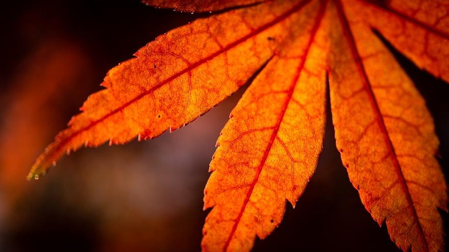 ひそやかに色づくカエデ_d0353489_20063035.jpg
