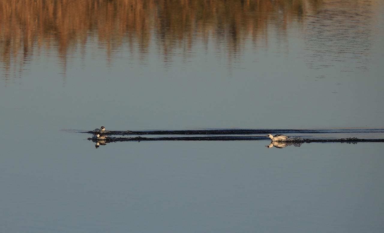 湿原にて_f0296999_08215474.jpg