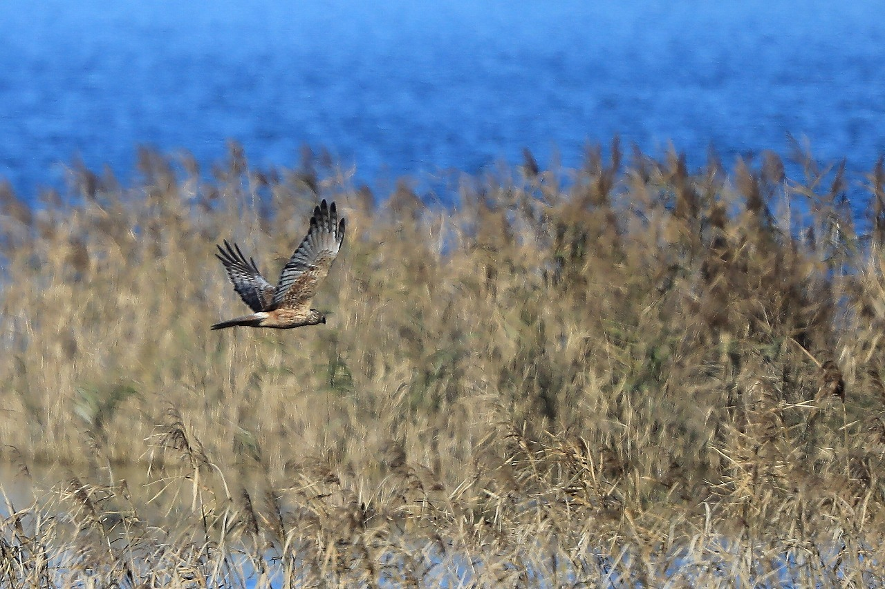 湿原にて_f0296999_08232972.jpg
