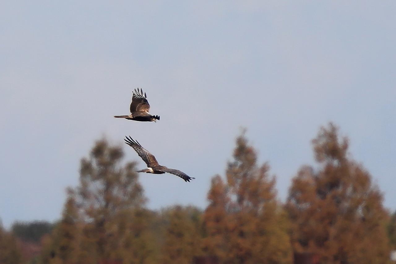 湿原にて_f0296999_08241023.jpg