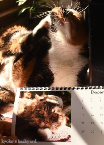 カレンダーもいよいよ最後の1枚_b0253205_04513841.jpg